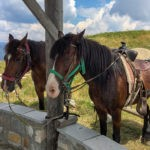 Horse riding tips: Find out if there is a horse that works well with yours