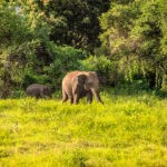 Elephants at Kaudulla National Park in Sri Lanka