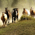 Saddle up: horse riding tips for your first tour