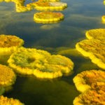 Dallol: visiting the hottest place on earth