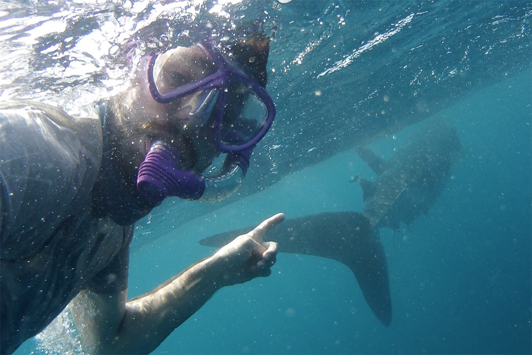 peter Swimming with whale sharks in djibouti