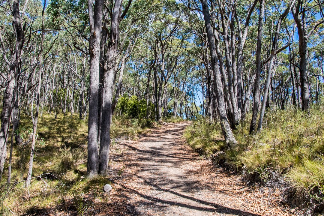 Mount Lofty walking trails 3