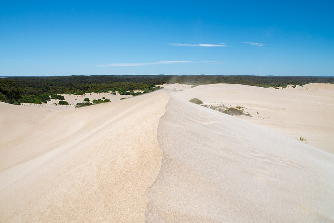 things to do on kangaroo island: The sand dunes at Little Sahara