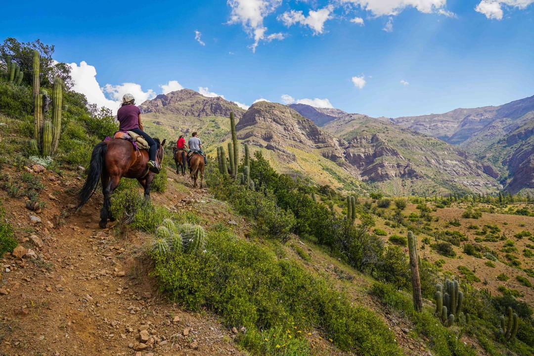 Horse riding is an excellent outdoor activity in Chile