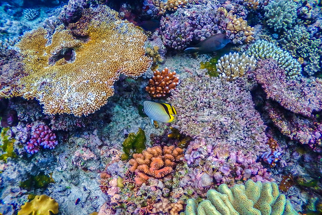 Escape Reef is of the best dive sites in the Great Barrier Reef