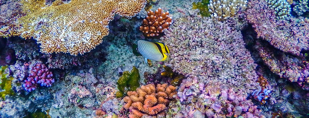 best dive sites in the Great Barrier Reef