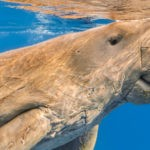 interesting facts about the great barrier reef: dugong