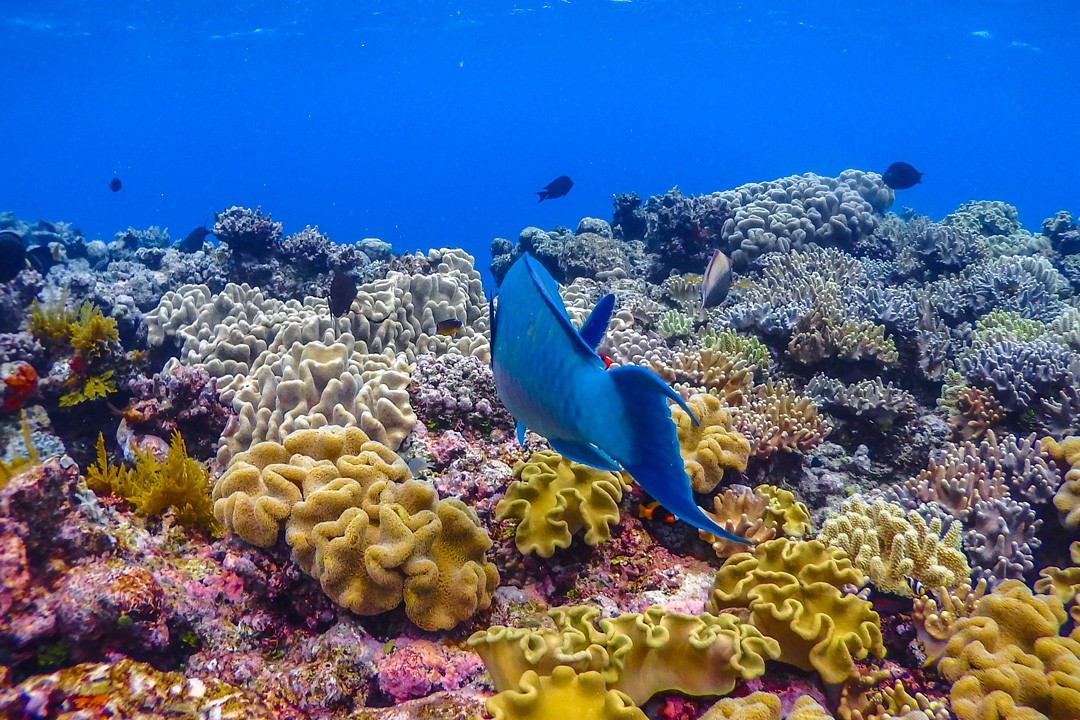 protect the Great Barrier Reef coral garden