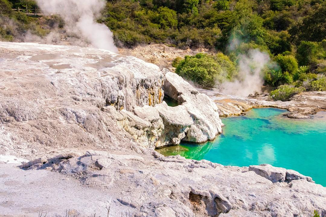 rotorua geysers steaming in te puia