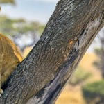 Animal instinct: eco-friendly wildlife tours