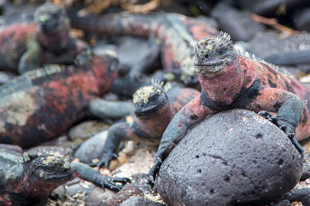 Eco-friendly wildlife tours galapagos