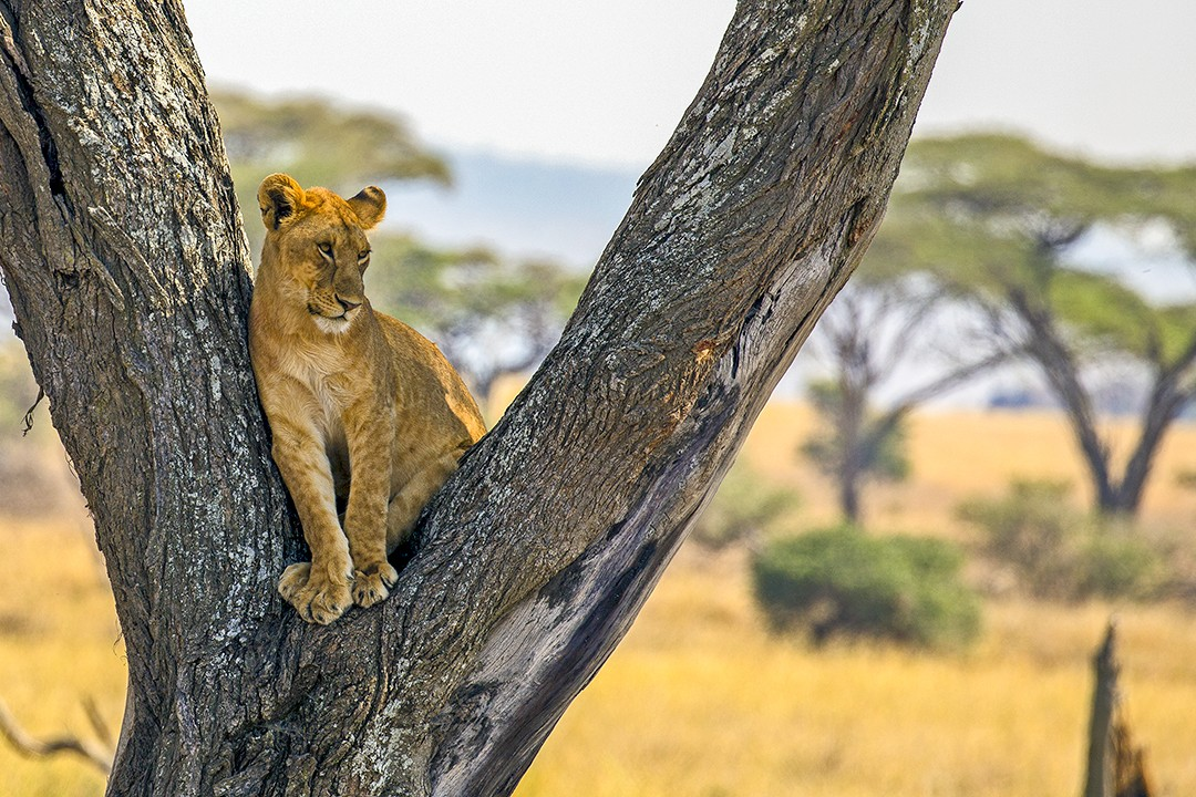 Eco-friendly wildlife tours serengeti