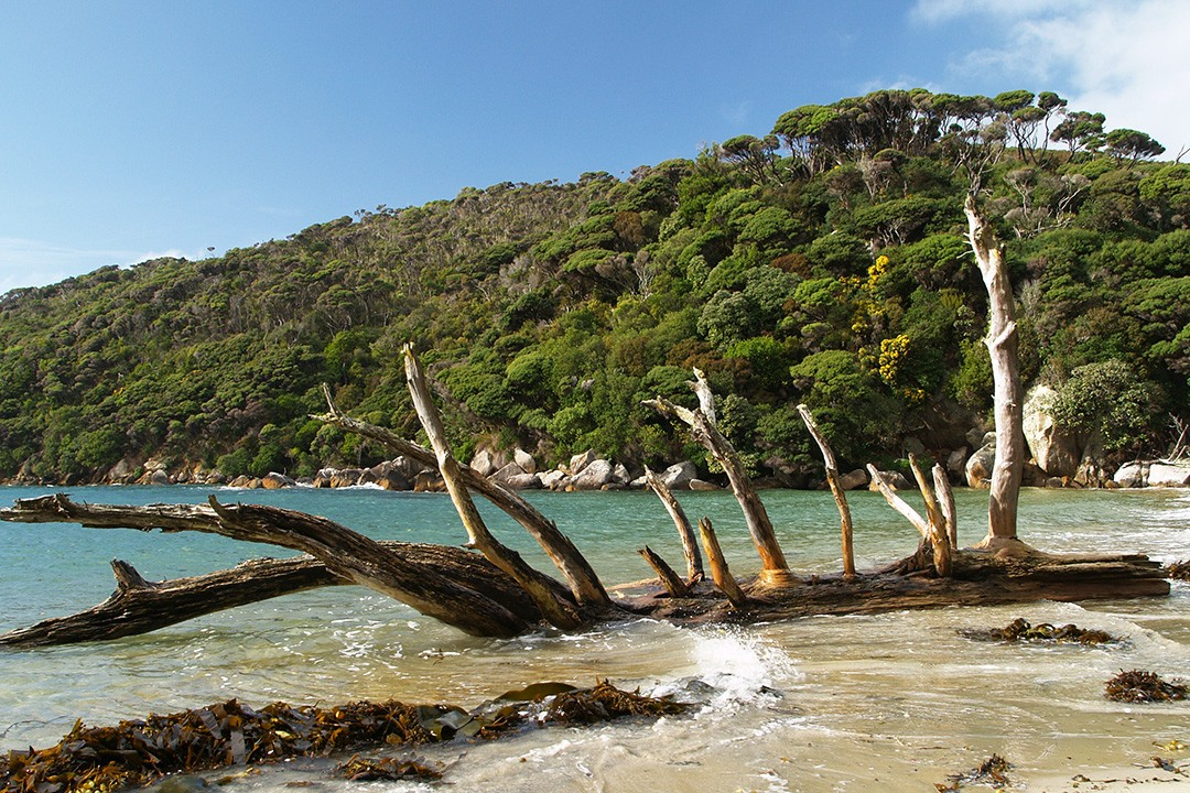 Great Walks of New Zealand stewart island