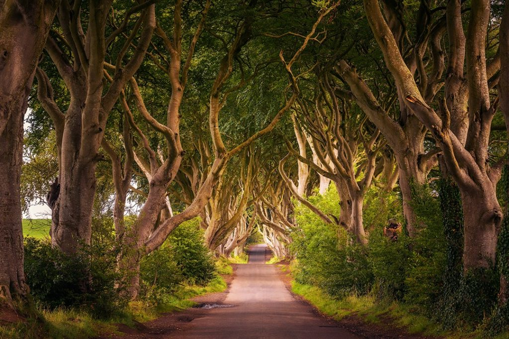 The Dark Hedges double up as the Kingsroad in Game of Thrones