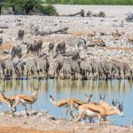 Safari in Etosha National Park Namibia 10