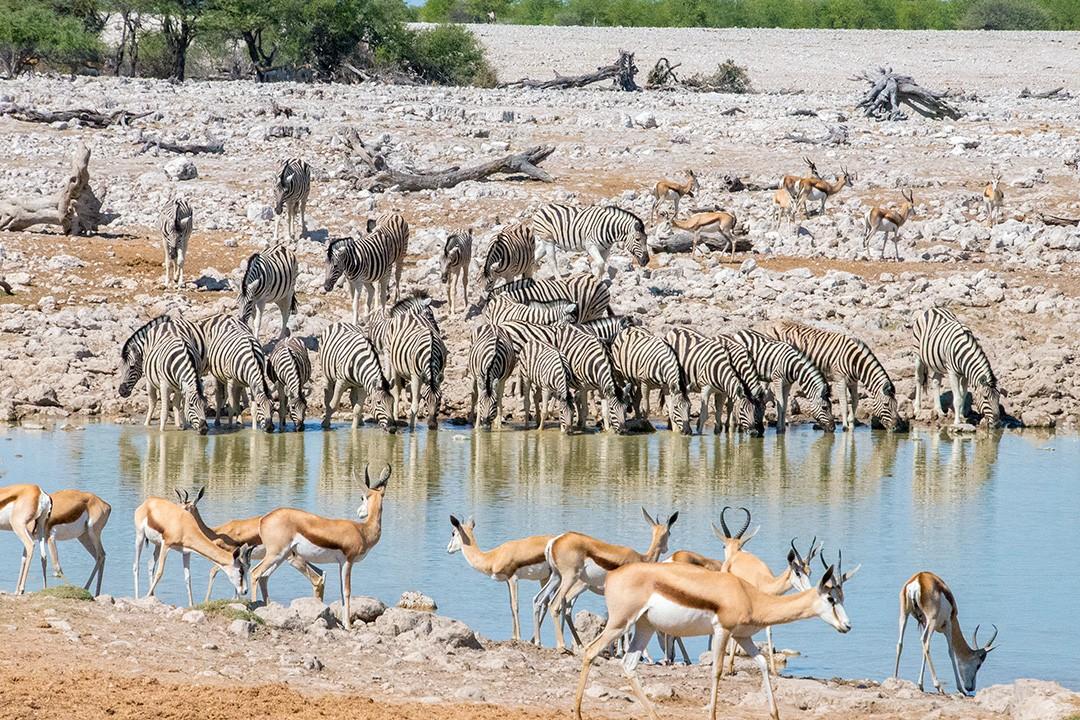 Safari in Etosha National Park Namibia 10