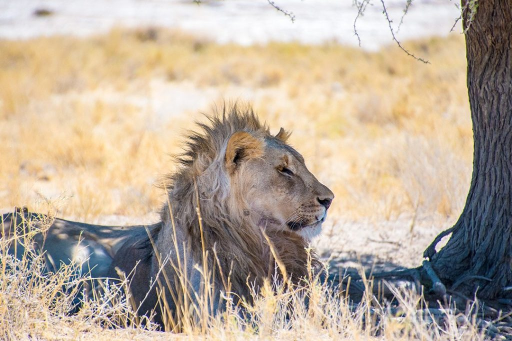 self-drive safari through Namibia etosha