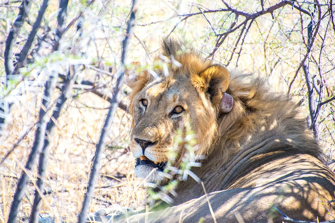 Safari in Etosha National Park Namibia 16