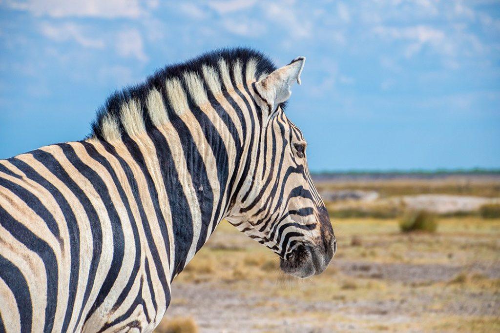Safari in Etosha National Park Namibia 24