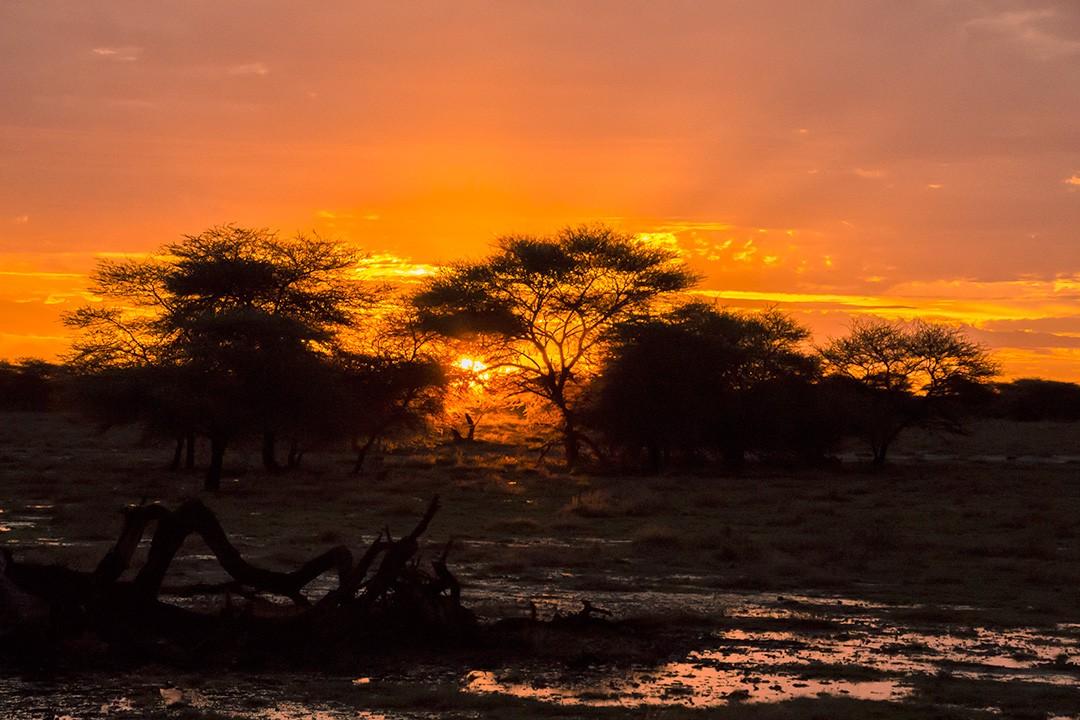 self-drive safari through Namibia