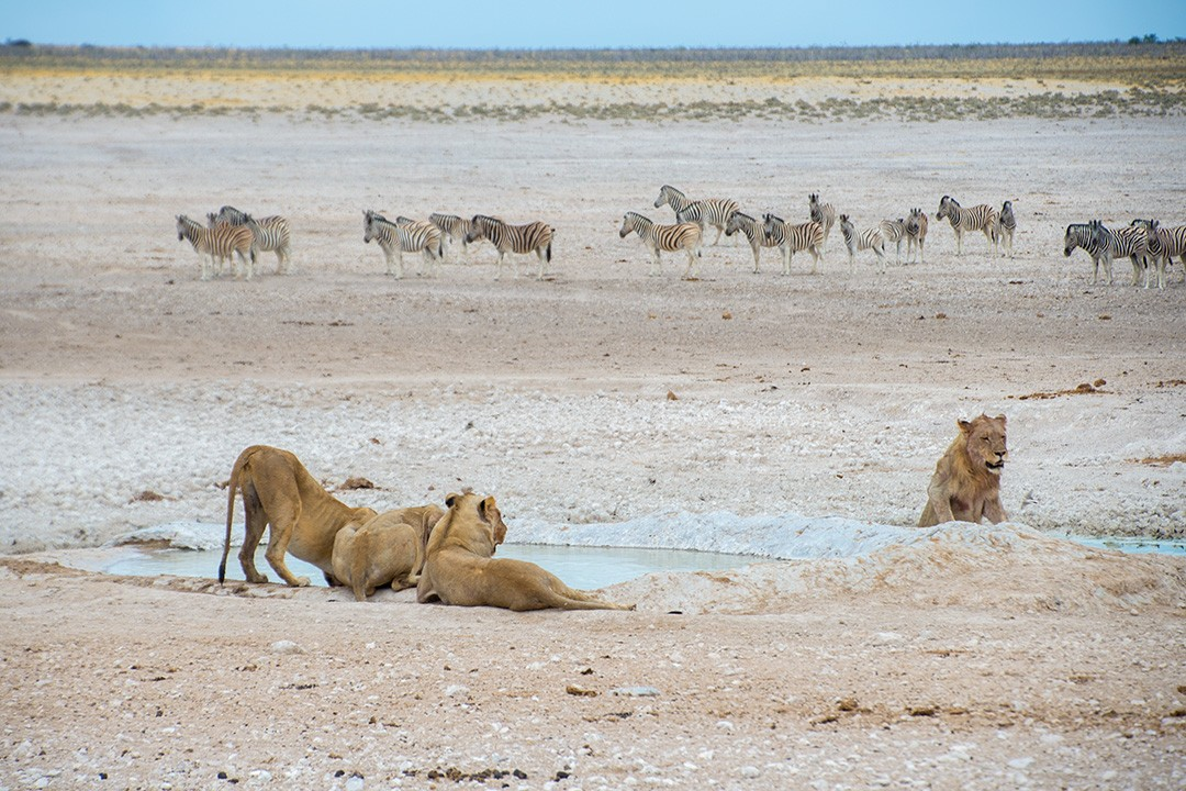 Safari in Etosha National Park Namibia 8