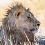 Safari in Etosha National Park: where the wildlife comes to you