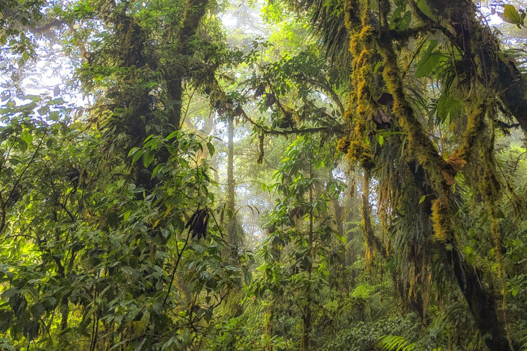 Cloud forest covers only 1% of global woodland