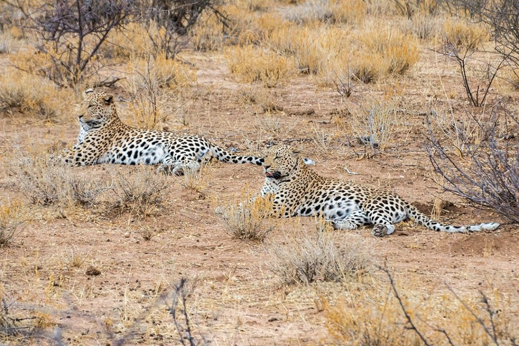 AfriCat fosters a culture of coexistence at Okonjima Nature Reserve