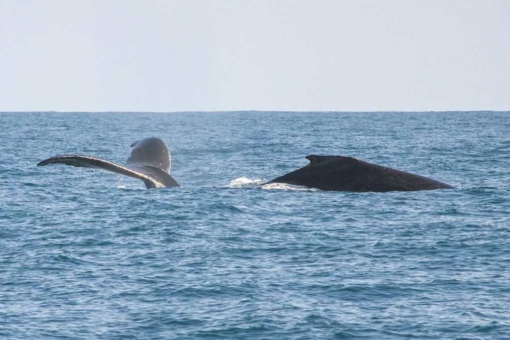 Surprise whales on our National Geographic Expedition to Costa Rica