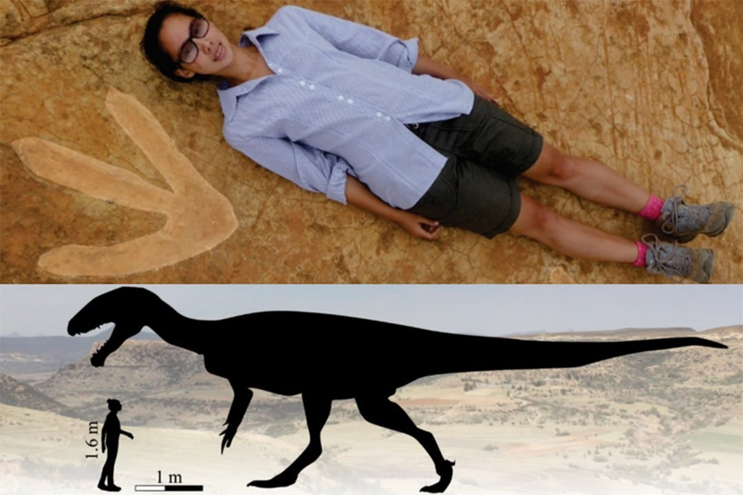 interesting facts about lesotho dinosaur