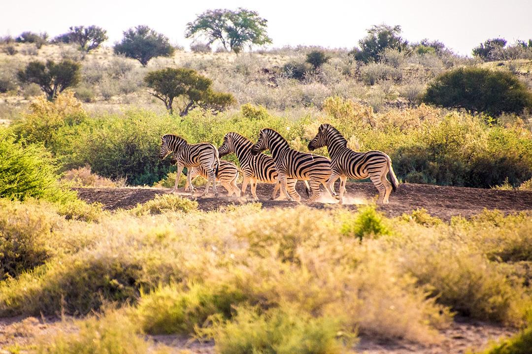 self-drive safari through Namibia 1