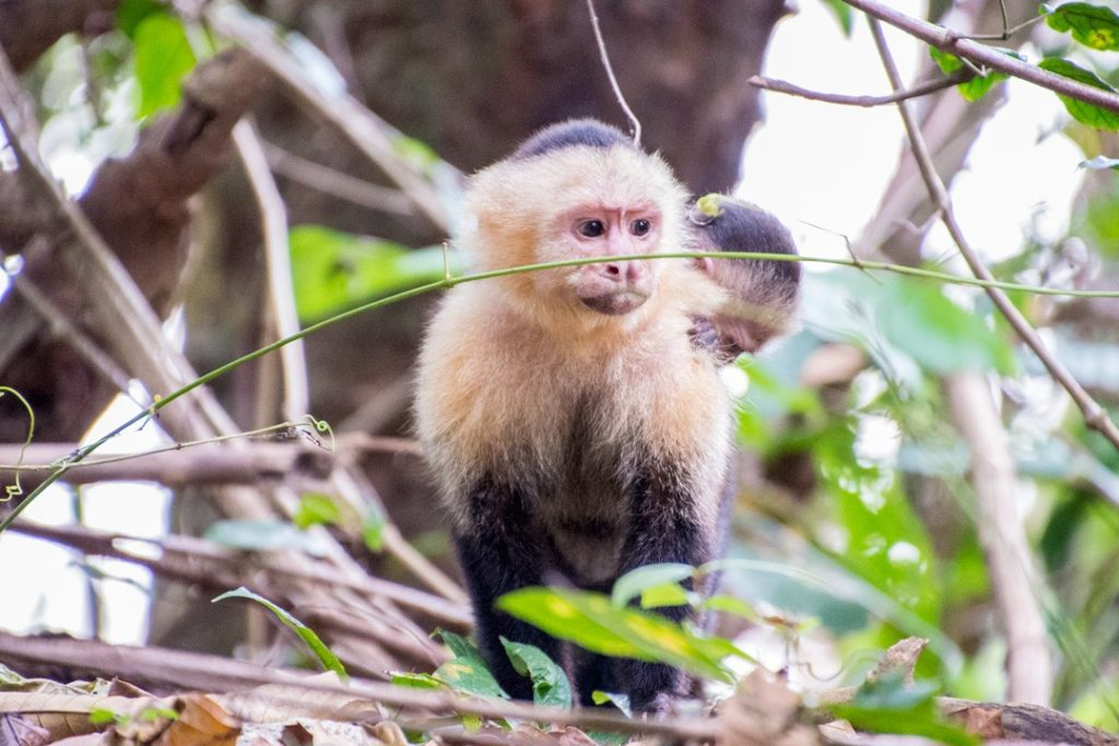 We saw a monkey while searching for sloths in Manuel Antonio National Park