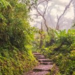 Santa Elena Cloud Forest: a fairytale hike in Costa Rica