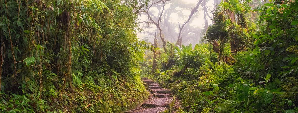 Santa Elena Cloud Forest in Costa Rica