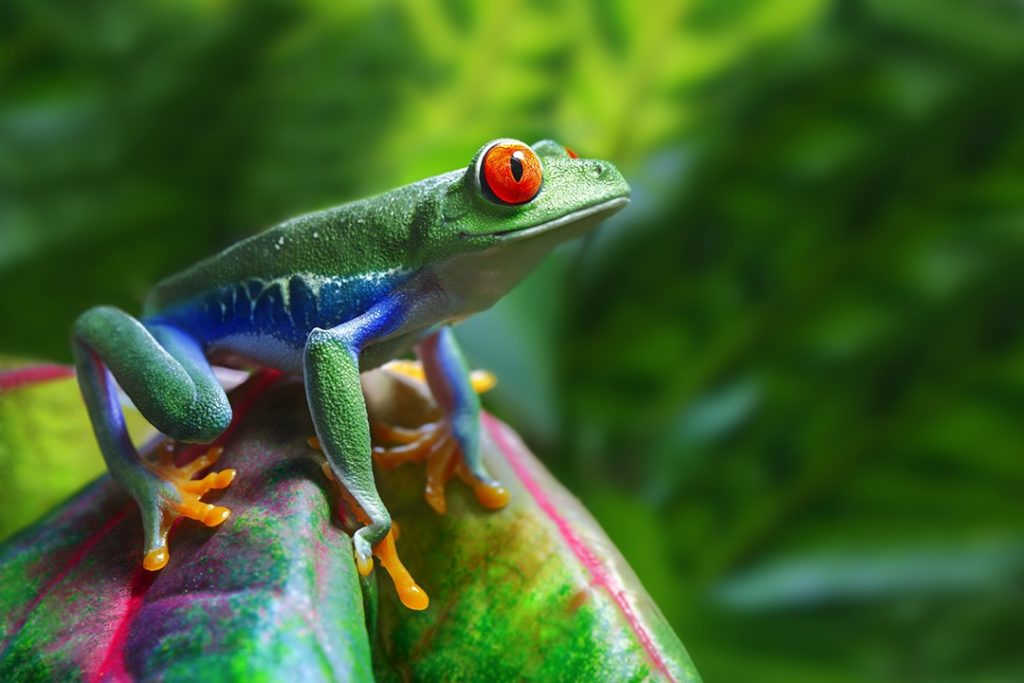 interesting facts about costa rica biodiversity frog