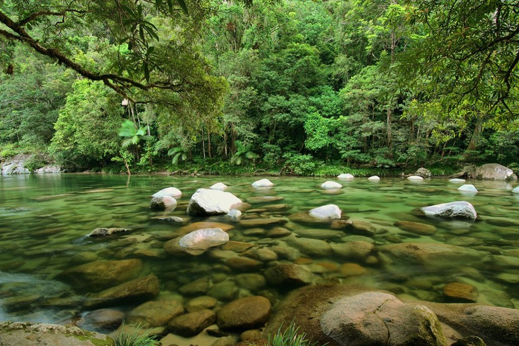 largest rainforests in the world 1 daintree