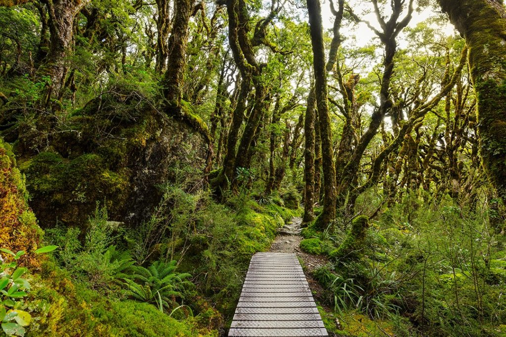 largest rainforests in the world NZ