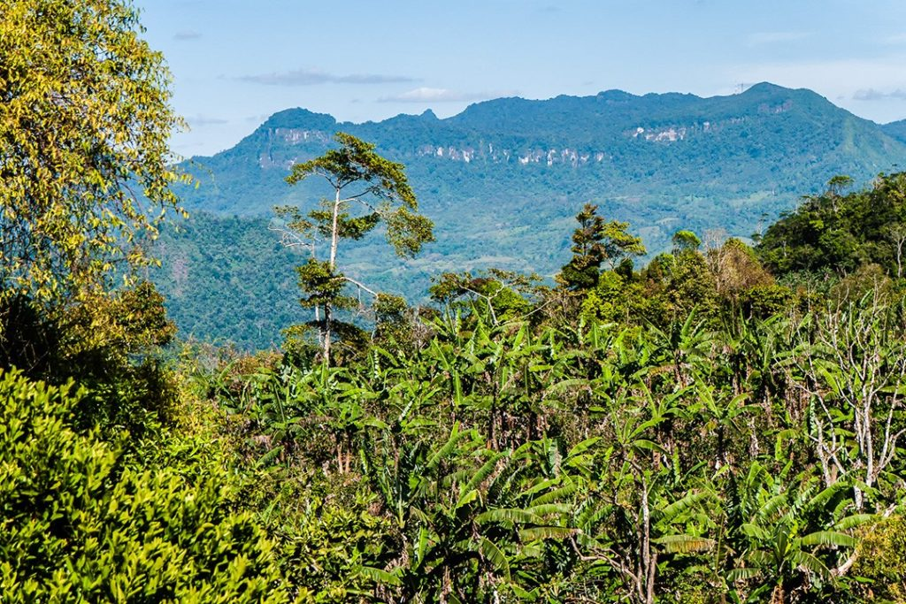 largest rainforests in the world Nicaragua