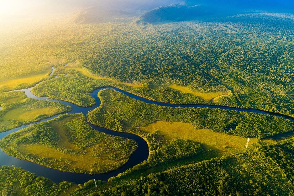 largest rainforests in the world amazon