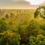 12 largest rainforests in the world