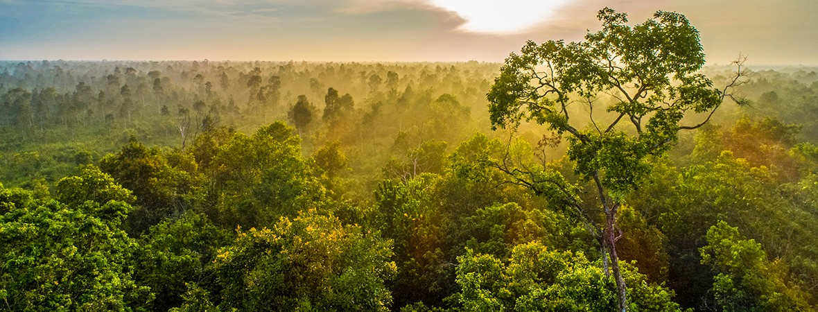 largest rainforests in the world canopy lead image