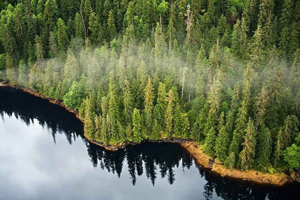 Temperate rainforests spread further north and south