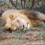 things to do in Eswatini Swaziland big five