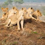 Manyeleti Game Reserve: our first safari in South Africa