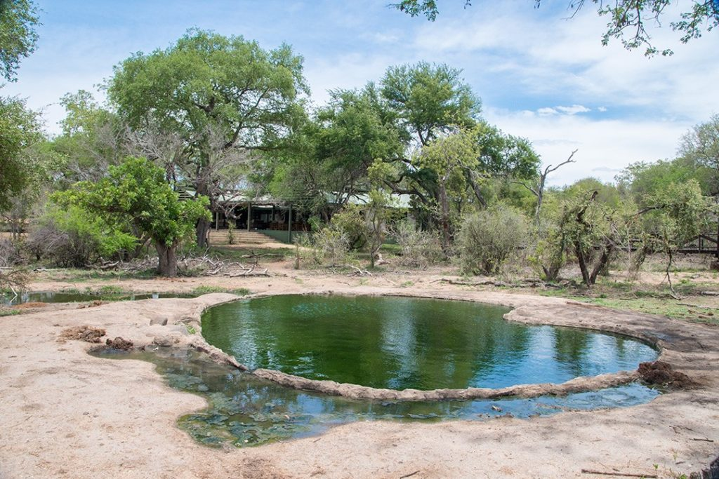 A waterhole at Manyeleti Game Reserve