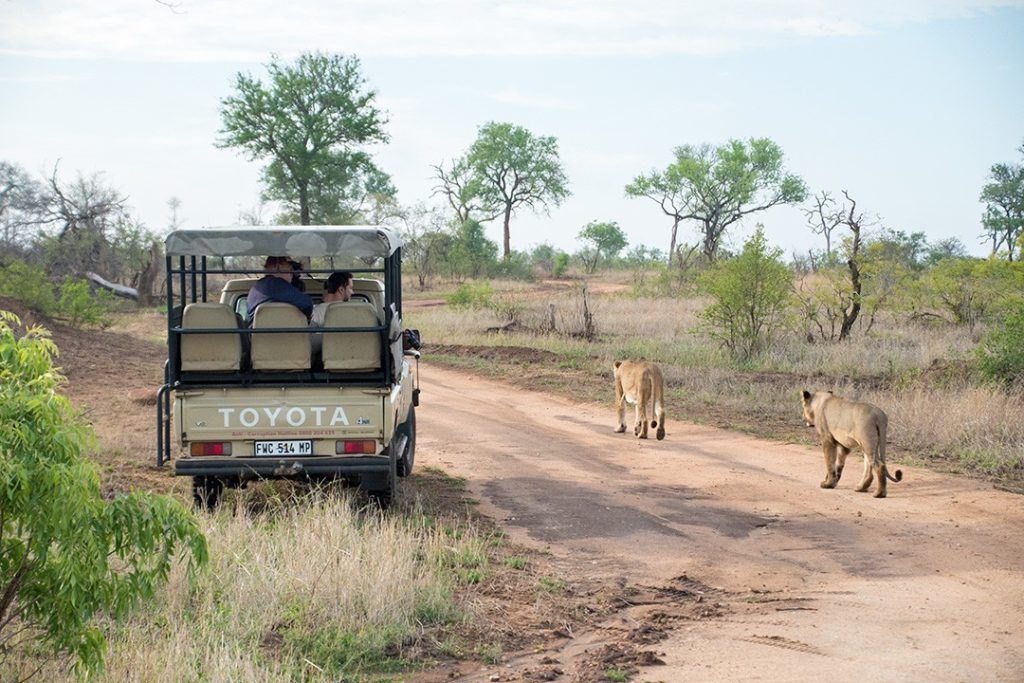 Lions pass our vehicle