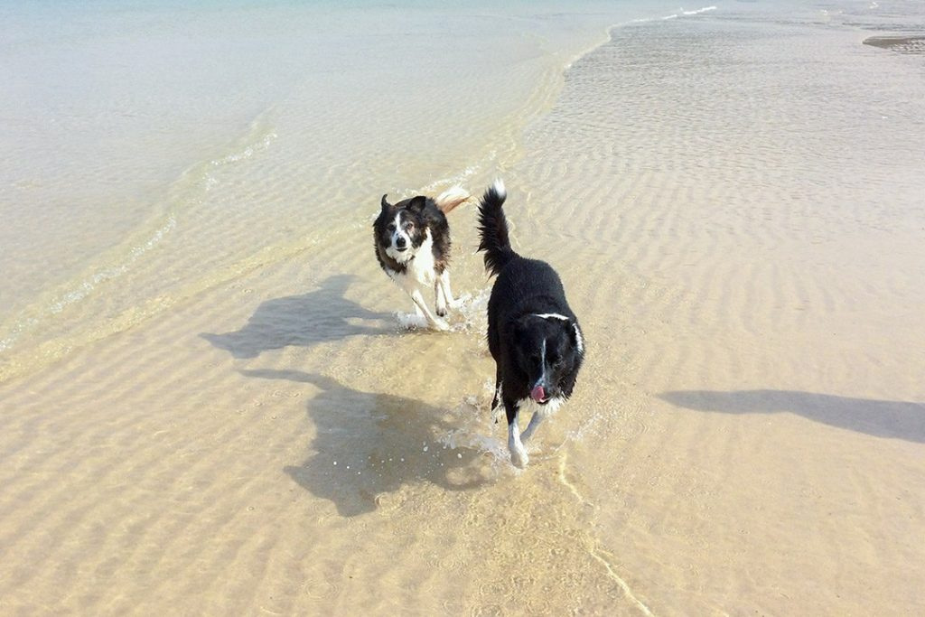 St Ives' beaches welcome dogs over winter