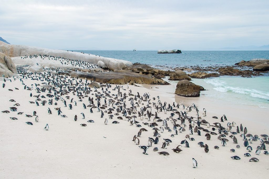 Penguins dotted along the beach