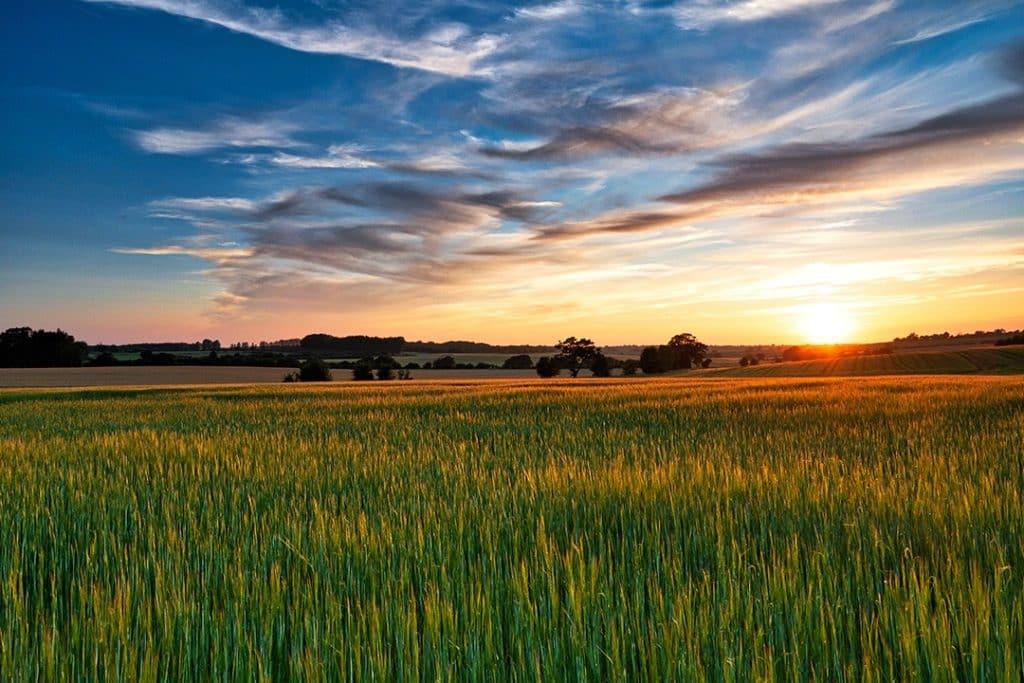 Suffolk crop fields
