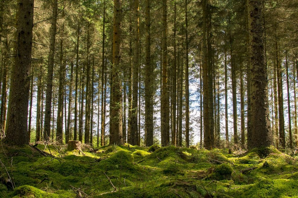 Kielder Forest in Northumberland is a great outdoor destination in Britain